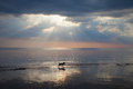 Dog at sea. Royalty Free Stock Photo