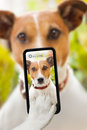 Dog selfie taking a with a smartphone Stock Photo