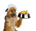 Dog serving up a gourmet meal Royalty Free Stock Image