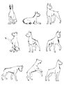 Dog set boxer nine dogs figures in different poses outlined Royalty Free Stock Photo