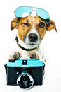 Dog with shades and a photo camera Royalty Free Stock Photo
