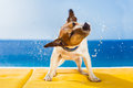 Dog shaking cute small at the beach with closed eyes Stock Photo