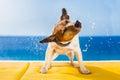 Dog shaking Royalty Free Stock Photo