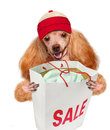 Dog. Shopper. Sales. Royalty Free Stock Photo