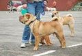 Dog show Royalty Free Stock Photo