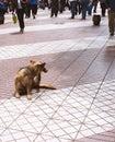 Dog on sidewalk Royalty Free Stock Photo