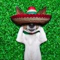 Dog siesta Royalty Free Stock Photo