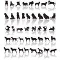 Dog silhouettes Royalty Free Stock Photo