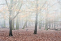 Dog sits in foggy forest Winter landscape Royalty Free Stock Image