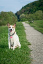 Dog sitting on grass in a park Royalty Free Stock Photo
