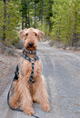 Dog sitting on gravel forest road Stock Image