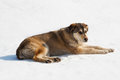 Dog sitting on snow brown stray in a sunny day Stock Photo