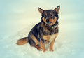 Dog sitting on the snow Royalty Free Stock Photo