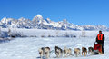 Dog sled team racing on a beautiful sunny winter day Stock Image