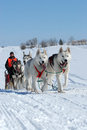 Dog sled team racing on a beautiful sunny winter day Stock Photography