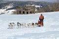 Dog Sled Team Racing Royalty Free Stock Photo
