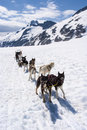 Dog sledding adventure special in alaska dogsled experience travel destination Royalty Free Stock Image