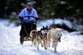 Dog sledding with husky Royalty Free Stock Photo