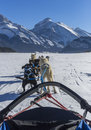 Dog sledding in mountains a team of eight dogs pulling a sleigh with blue sky and the distance Stock Photography