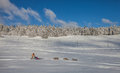 Dog Sledding in Switzerland Stock Photos