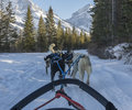 Dog sledding a view from a sleigh of eight dogs pulling a sleigh through a tree lined path with mountains in the distance Stock Images