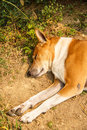 Dog sleep floor Royalty Free Stock Images