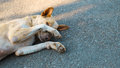 The dog is sleeping on cement background,The dog is shy. Royalty Free Stock Photo