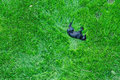Dog sleeping on green grass Stock Photos