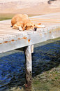 Dog sleeping on pier Stock Photos