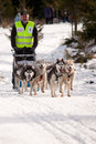 Dog sleigh racing six husky pack at the first edition of the belis cup jaunuary february a competition in balcesti cluj county Stock Photography