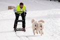 Dog sleigh racing in transylvania two pulled by samoyede dogs at the first edition of the belis cup jaunuary february a Stock Photo