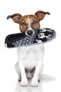Dog slipper mouth Royalty Free Stock Photo