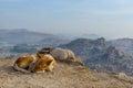 Dog slipping at the top of hampi a karnataka india Royalty Free Stock Images