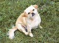 Dog small sitting in the grass Royalty Free Stock Photo