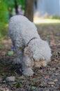 Dog sniffing around Royalty Free Stock Photo