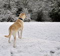 Dog in Snow Stock Photo