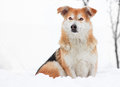 Dog in the snow Royalty Free Stock Photos