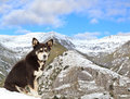 Dog and Snow Mountains Royalty Free Stock Photography