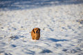 Dog in the snow winter Royalty Free Stock Image
