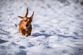 Dog in the snow winter Stock Photo