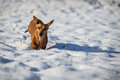 Dog in the snow winter Royalty Free Stock Photos