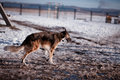 Dog in snowy countryside Stock Photography