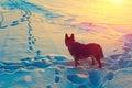 Dog In Snowy Field