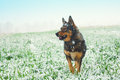 Dog on the snowy field Royalty Free Stock Photo