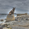 Dog that sphinx in hdr on the stone pedestal at sea like Royalty Free Stock Photo