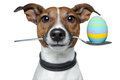 Dog with spoon and easter egg Stock Photography