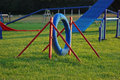 Dog sport agility tyre equipment in a field Royalty Free Stock Photo