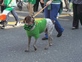 Dog at St Patrick Parade Stock Image