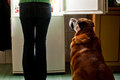 Dog staring at fridge hungry waiting for a dinner refrigerator emit bright light feeding time Stock Photo