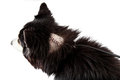 Dog with stitches on a wound from surgery shaved area of fur revealing large cut recent to remove tumor image taken isolated Stock Photography
